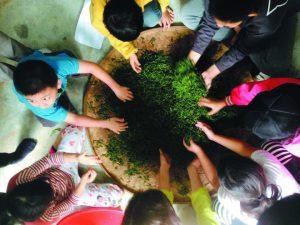 一日小茶農-這一天我們在茶園裡奔跑